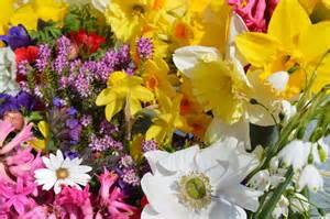 sussex flower farm