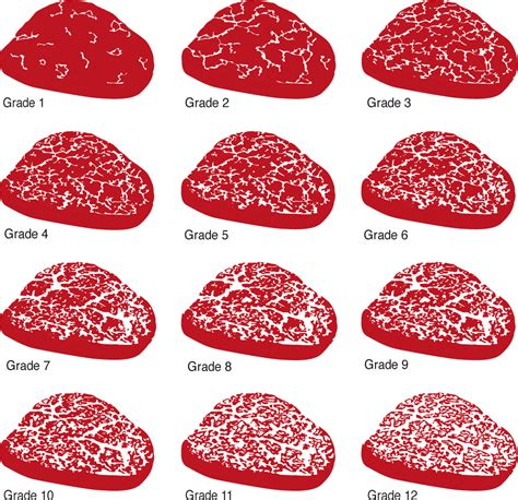 wagyu steak marbling wagyu vs beef canegra