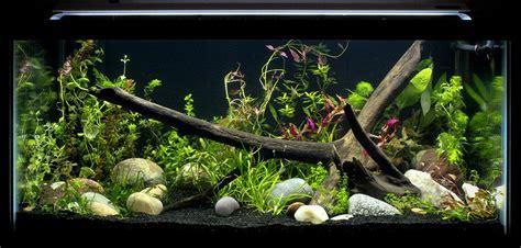 Best Low Light Aquarium Plants tetra fish tanks and aquarium setup