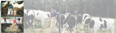 Starbio Ternak jerami pakan ternak dan pembuatan pupuk