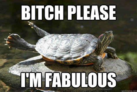 Turtle Memes - 20 turtle memes that ll make your day better