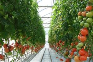from parliament house to a tomato greenhouse abc rural australian broadcasting corporation
