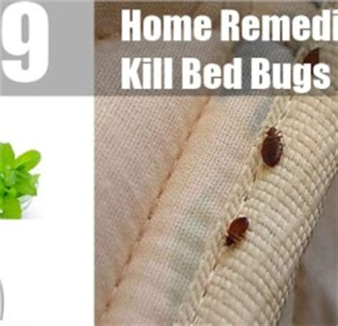 home remedies to kill bed bugs treatments cure
