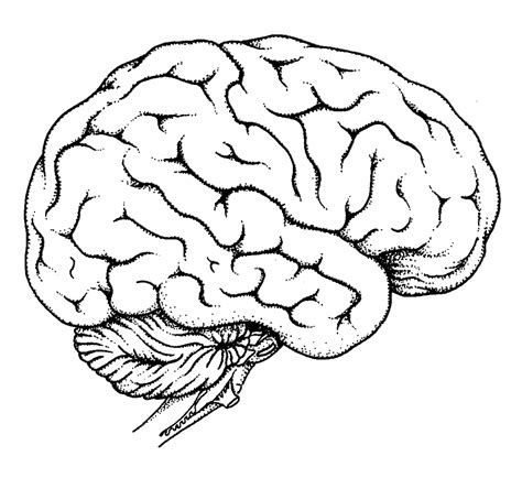 brain color free and the brain coloring pages
