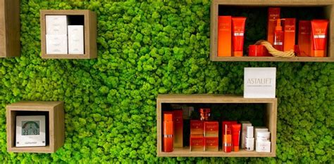 living moss in interior design 25 ideas and care tips