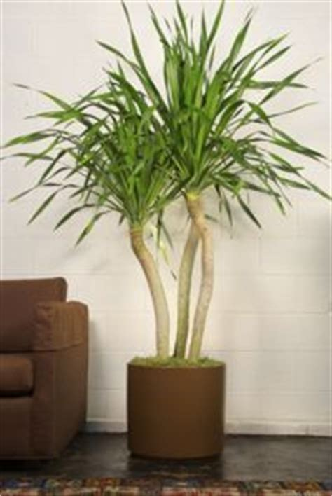 Houston Interior Plants by The World S Catalog Of Ideas