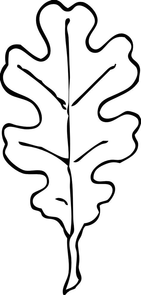 oak leaf coloring page clipart best