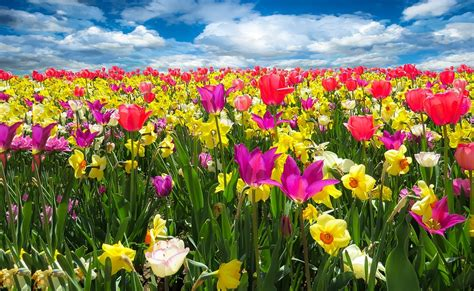 image of spring flowers free photo spring awakening spring free image on