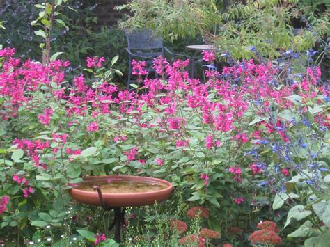 cottage gardener seeds how to your garden style realestate au