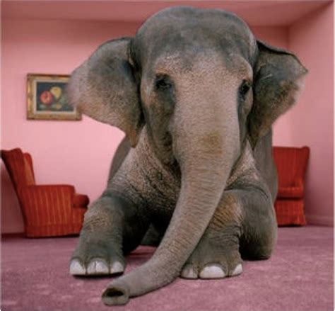 elephant in the room faith the elephant in the room