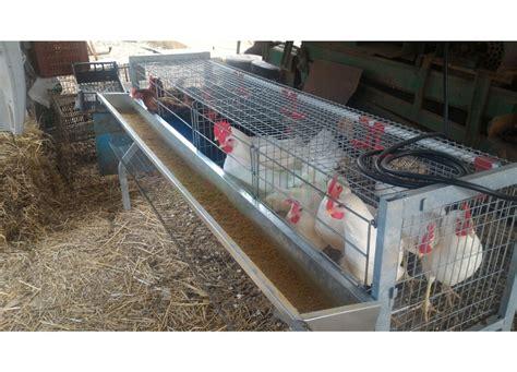 gabbia galline ovaiole gabbia per 20 galline ovaiole a 4 fori 1 piano