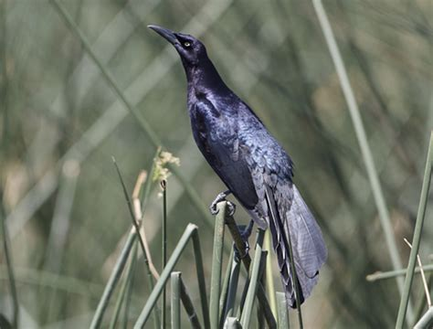 best 28 grackles are you getting them ablutions