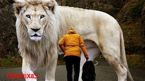 imagenes animales grandes animales gigantes reales que no sabias que existian parte