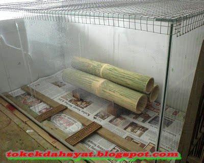 Alas Kandang Tokek pembuatan penangkaran tokek sederhana tokek indonesia