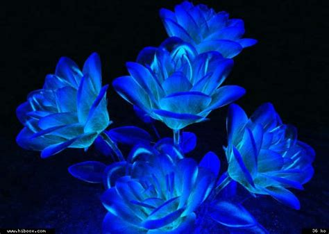 flores azules claras mariposa imagenes de archivo imagen 2050474 rosas az 250 les animadas con movimiento imagui
