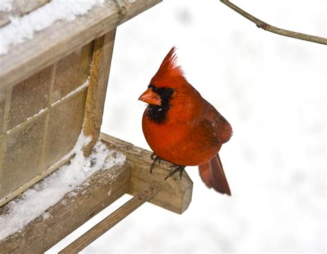 do all birds fly south in the winter wonderopolis