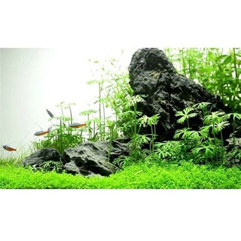 aquascaping with rocks 2482 best aquascaping images on pinterest aquascaping