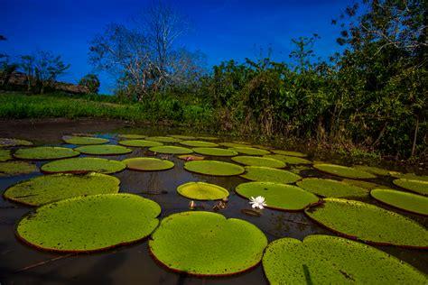 top ten adventures      peruvian amazon