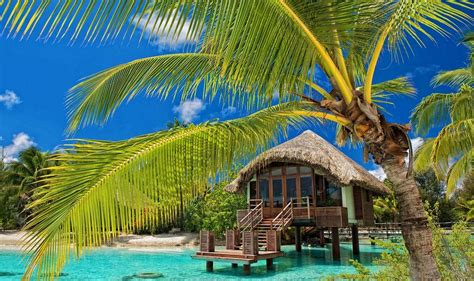 palm trees resort beach tropical water bungalow sea