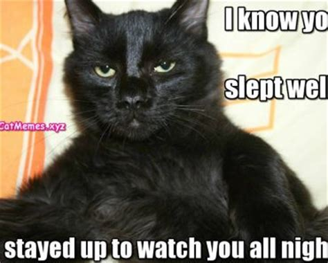 Black Cat Meme - black cat meme funny cat memes