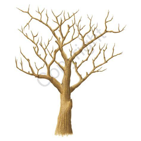 oak tree leaf template golden oak the fingerprint tree