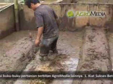 Bibit Belut Di Pekanbaru sukses membibitkan belut di lahan sempit