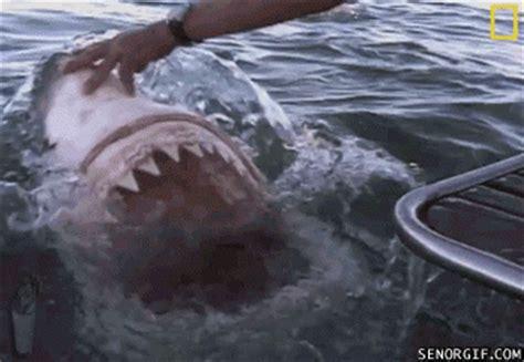 were on a boat gif nom nom shark eat boat gifs