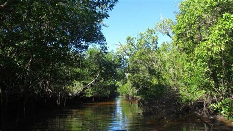 everglades national park boat tours mangrove wilderness beautiful mangrove forests picture of everglades