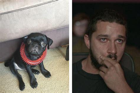 14 week pug say egg the 14 week pug who went missing has died