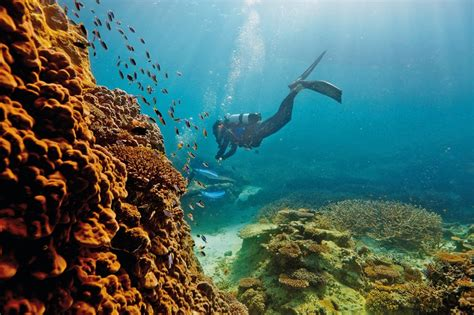 guide   great barrier reef tourism australia