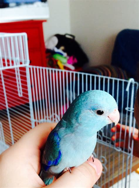 best 28 bird pet shops near me best 28 bird shops