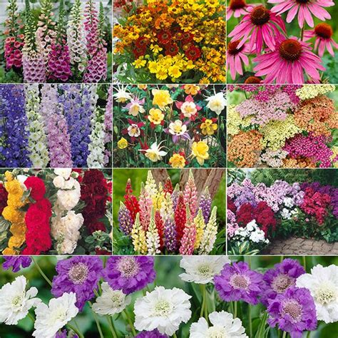 Cottage Garden Flowers List Sun Perennial Cottage Gardens Home Plants Grow Your Own Tools Outdoor Living Wildlife