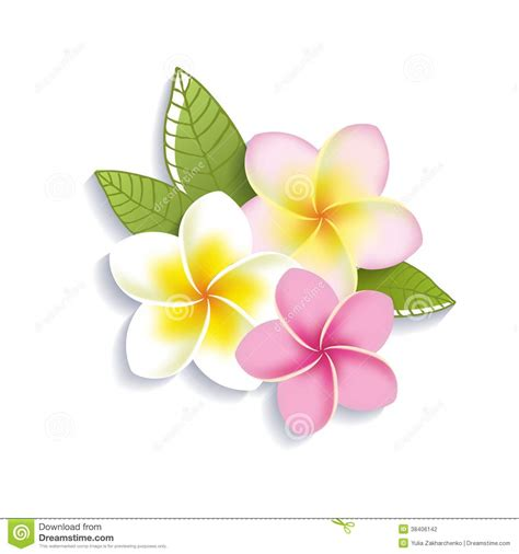 flower clipart pink flower clipart plumeria pencil and in color pink
