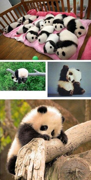 Baby Panda Climbing Out Of Crib by Best 25 Baby Pandas Ideas On Panda Pandas