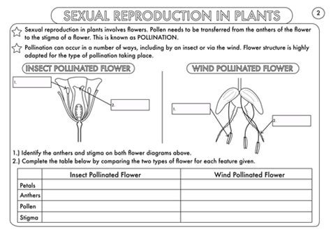 plant reproduction worksheet pollination worksheet worksheets for school getadating