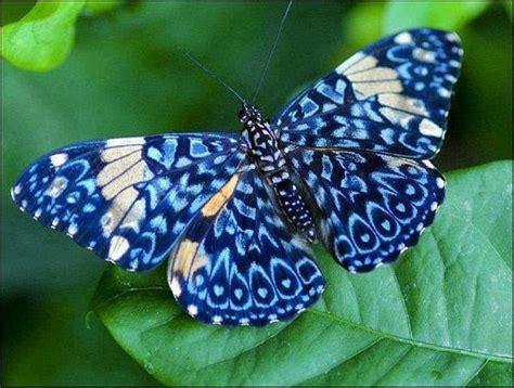 imagenes mariposas bellas ranking de las mariposas m 193 s hermosas del mundo