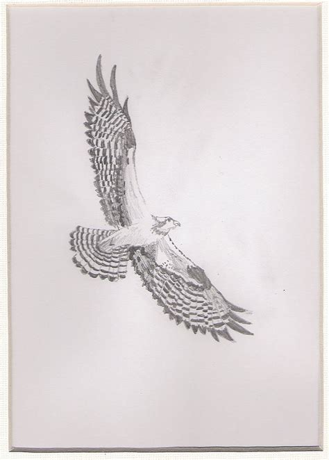 osprey tattoo designs 46 best osprey tattoos images on irezumi