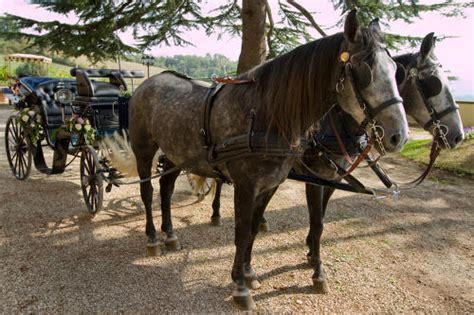 Cavalli Carrozze - cavalli e carrozze villa poggio bartoli