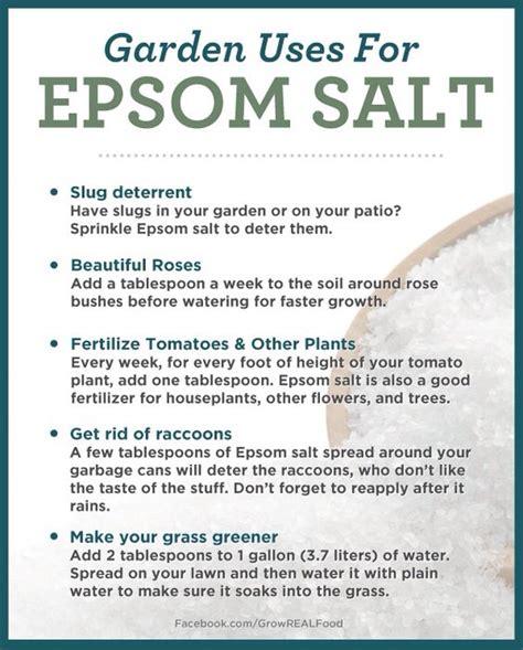 Epsom Salt For Gardening by Epsom Salt Uses Gardens Gardens Epsom