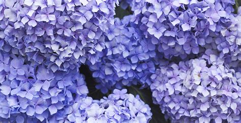 color purple meaning meaning of the color purple