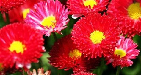 semi di fiori semi di fiori fiori in giardino abbellire il giardino