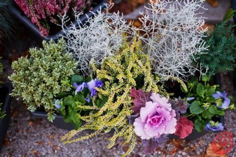 piante da davanzale composizioni floreali per le fioriere invernali