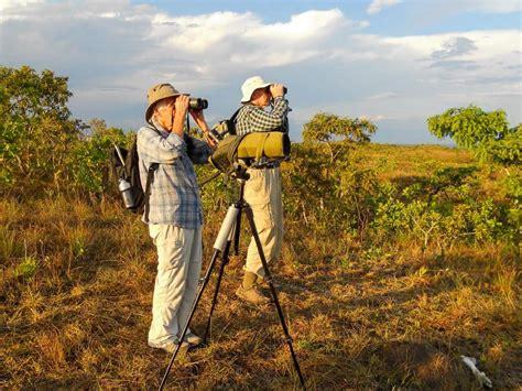 homepage birding pantanal