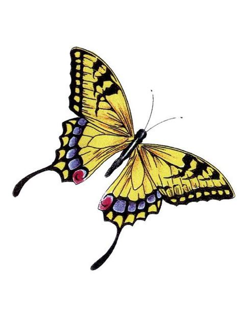 monarch butterfly tattoo meaning 25 best ideas about yellow butterfly on
