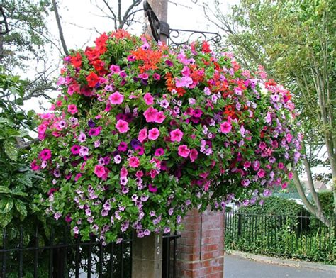 hanging baskets for flowers amethyst horticulture esi