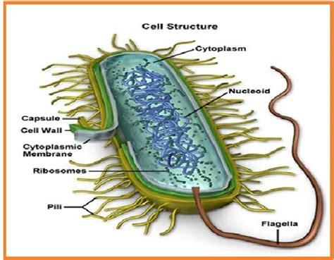 informasi berbagai hal jaringan epitel informasi berbagai hal daftar bakteri menguntungkan