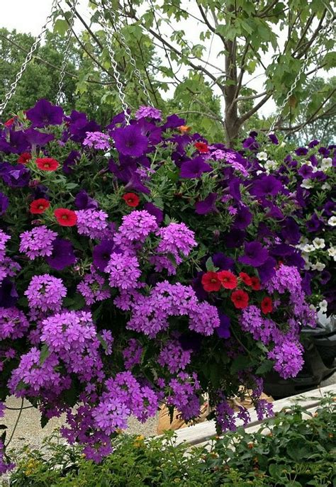 purple flower garden purple flower hanging basket container gardening
