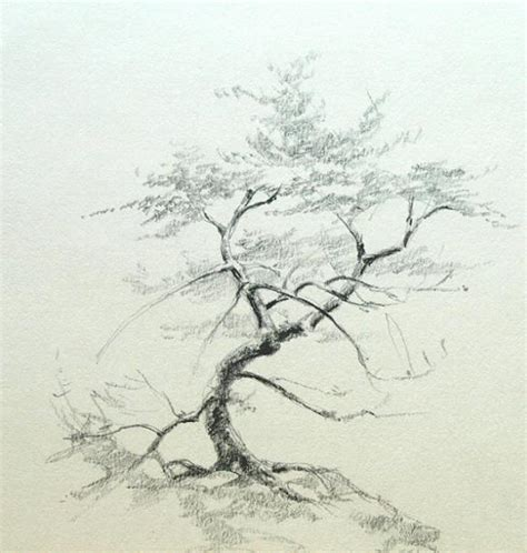 drawing and painting pencil drawing trees
