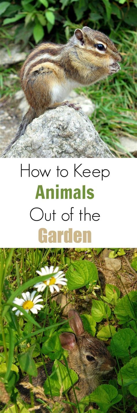 How To Keep Animals Out Of Garden by 10 Best Sunpatiens New Variety Of New Guinea Type Can