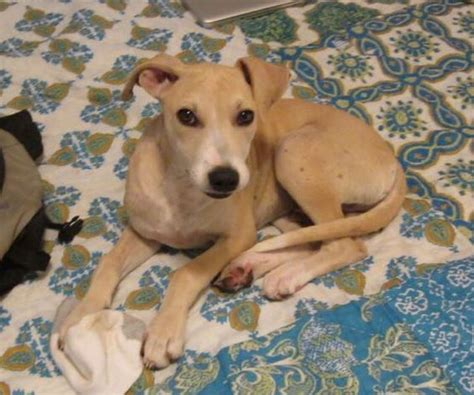 puppies for adoption columbia sc view ad carolina for adoption south carolina columbia usa